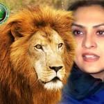 Marvi Memon lion pic, Marvi Memon scandal pic