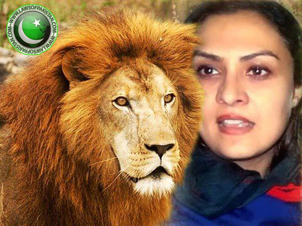 Marvi Memon lion pic, Marvi Memon scandal pic